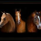 August 2008......Bill was featured in a month long exhibit at the John M Parrott Art Gallery with over 25 Images