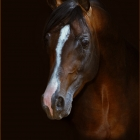 "Bill has been Awarded the "" Photographer of the Year  "" with the Napanee Photography Club several times,2007,2008,2009,2010,2011, 