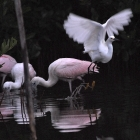 Birds of a Feather?