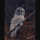 Front cover of 2018 Wildlife Calendar